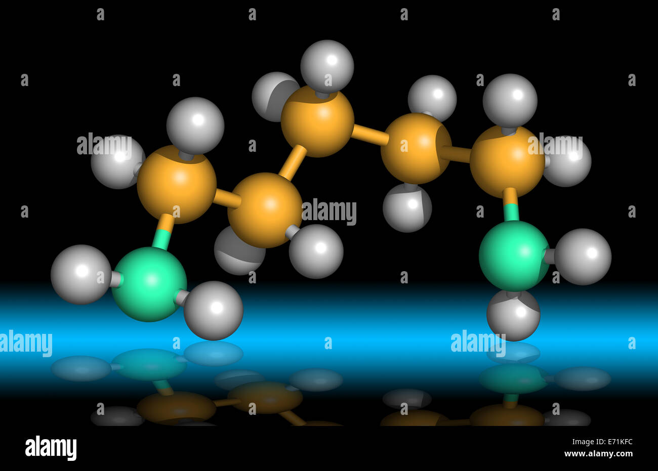 Cadaverin ist eine übelriechende Diamin Verbindung von Proteinhydrolyse während Fäulnis von tierischem Stockbild