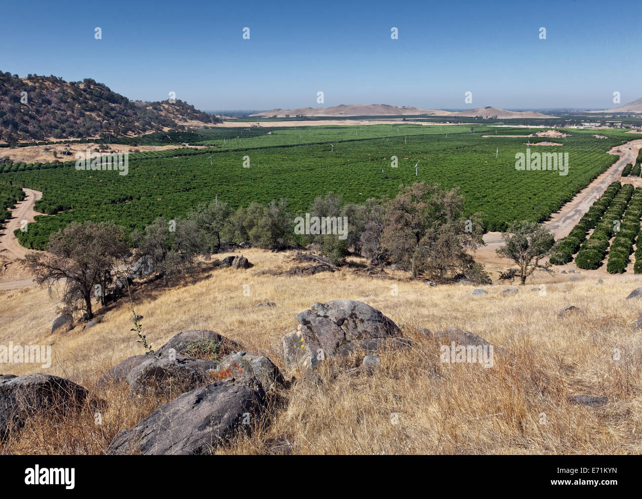 Orange Groves - Zentral-Kalifornien Bewässerung Stockbild