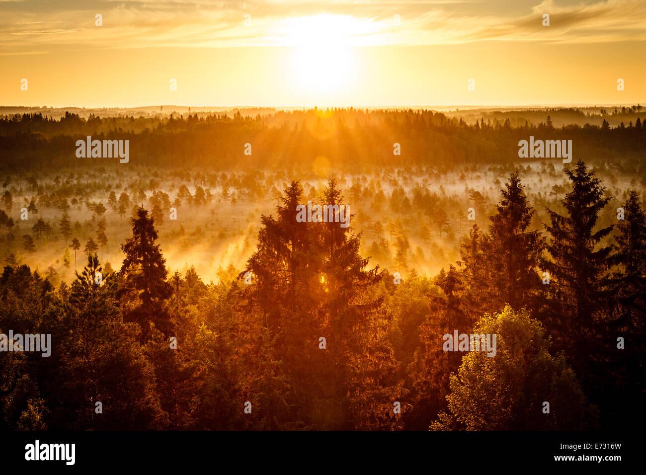 Sonnenaufgang an einem frühen Morgen im Torronsuo Sumpf in Finnland. Die Sonne scheint hell auf die goldene Stockbild