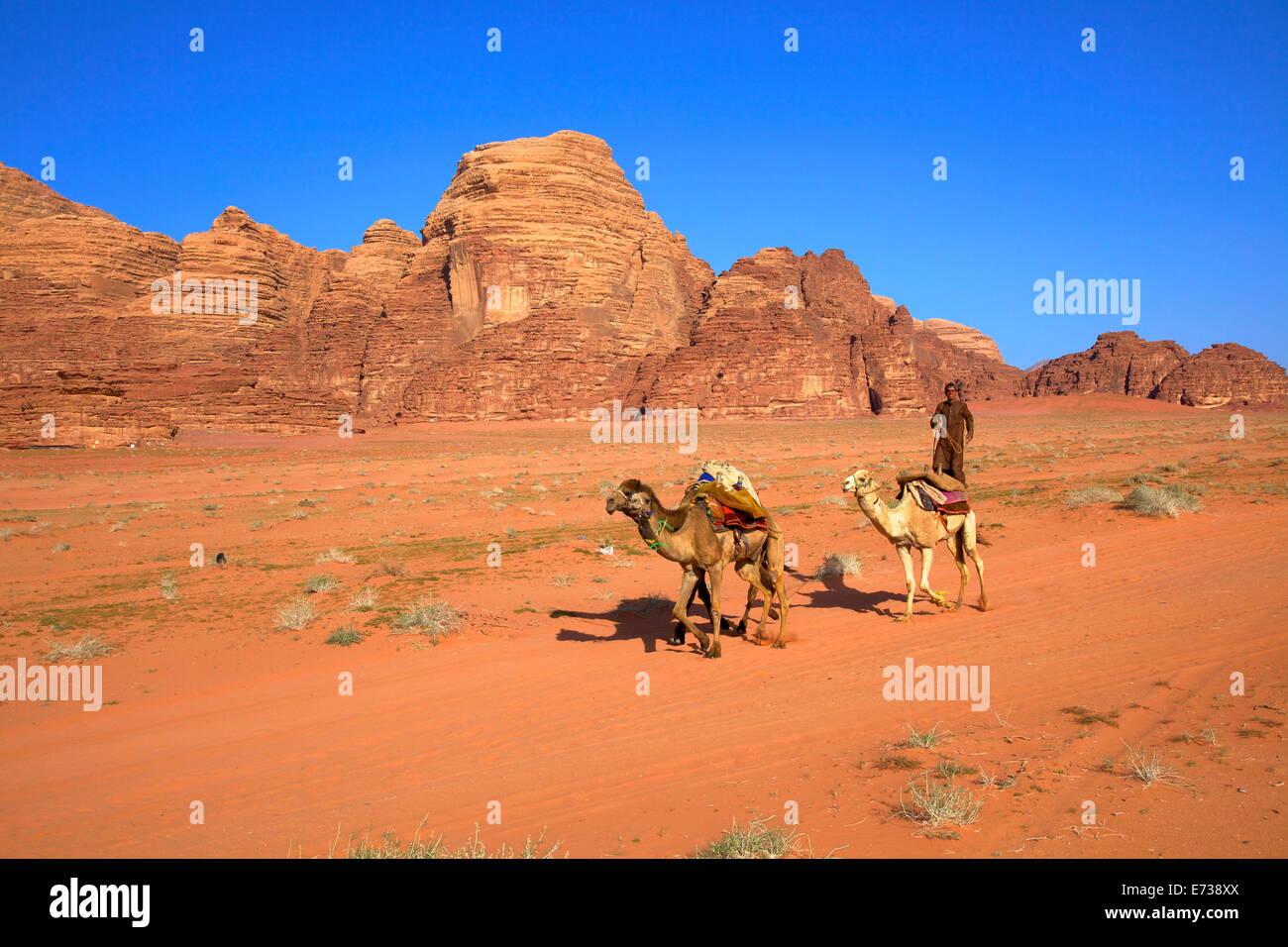 Beduinen und Kamele, Wadi Rum, Jordanien, Naher Osten Stockbild