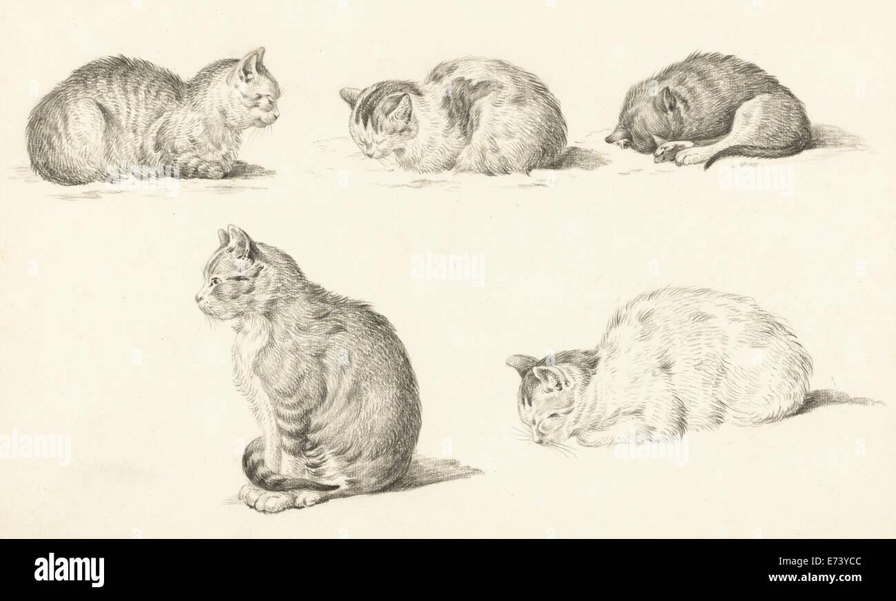 Fünf Studien von Katzen - von Jean Bernard, 1775-1833 Stockbild