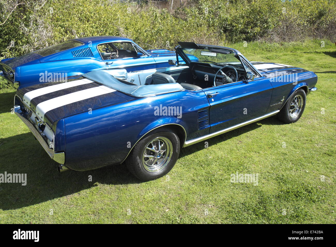 ford mustang 1967 stockfotos ford mustang 1967 bilder. Black Bedroom Furniture Sets. Home Design Ideas