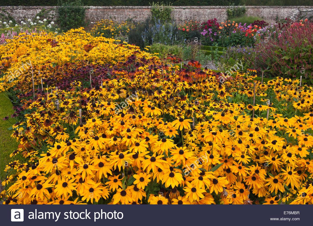 Welche Blumen Blühen Im September schnittblumen reihen wachsen dean ummauerten sussex