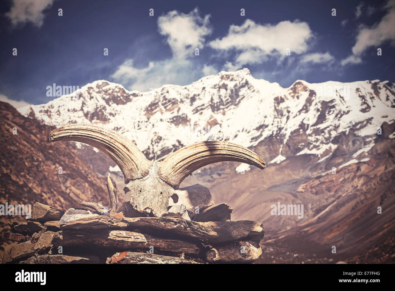 Vintage Bild von Yak Schädel mit Himalaya-Gebirge im Hintergrund, Nepal Stockbild