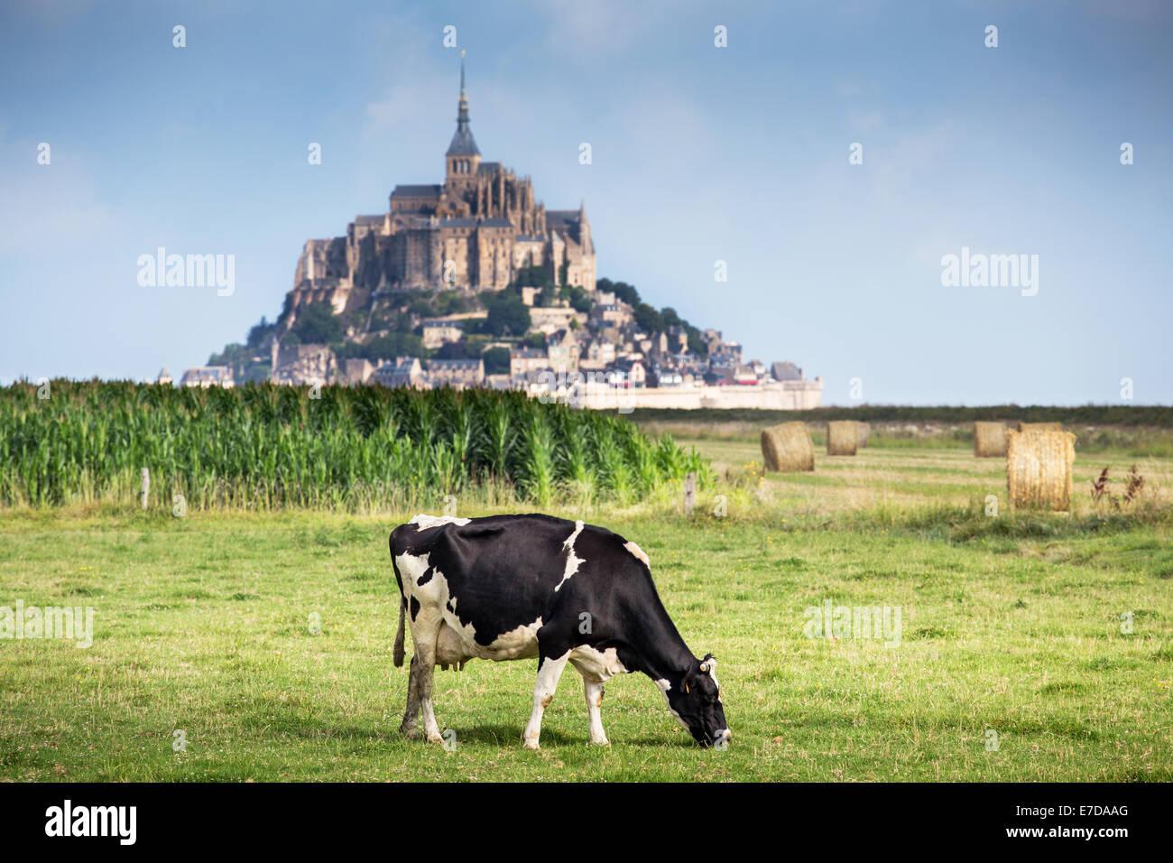 Bucht von Mont Saint Michel aufgeführt als UNESCO-Welterbe, Kuh auf der Weide und Mont Saint Michel im Hintergrund Stockbild