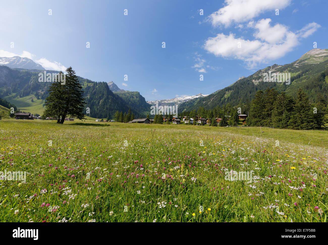 Nenzinger Himmel Almwiese, Gamperdonatal, Nenzing Pfarrei, Rätikon, Vorarlberg, Österreich Stockbild