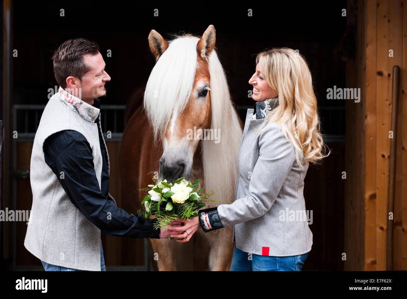 Mann, eine Frau Blumen, Tyrolean Haflinger die Blumen Essen Nord Tirol, Österreich Stockbild