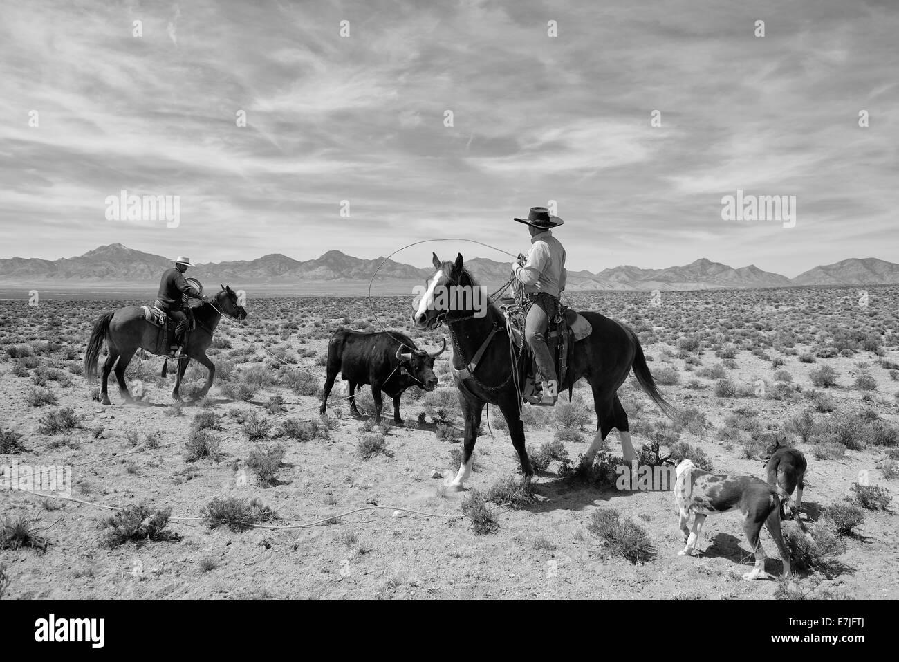 Cowboys Stockfotos & Cowboys Bilder - Alamy
