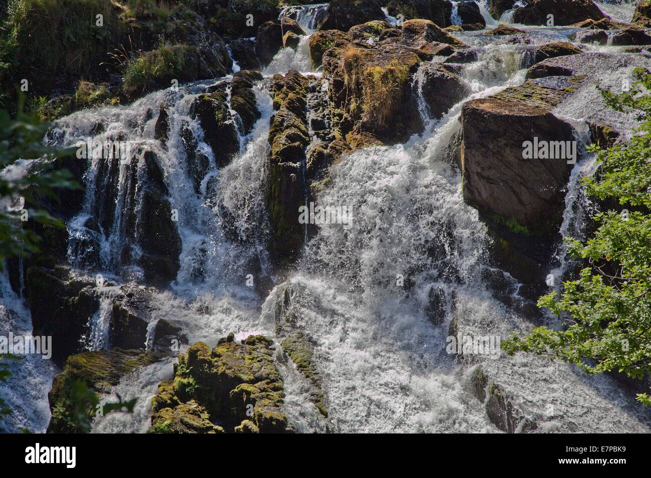 Schlucken fällt in Betws-y-Coed Nord-Wales die Wasserfällen gespeist werden durch den Fluss Conway. Stockbild