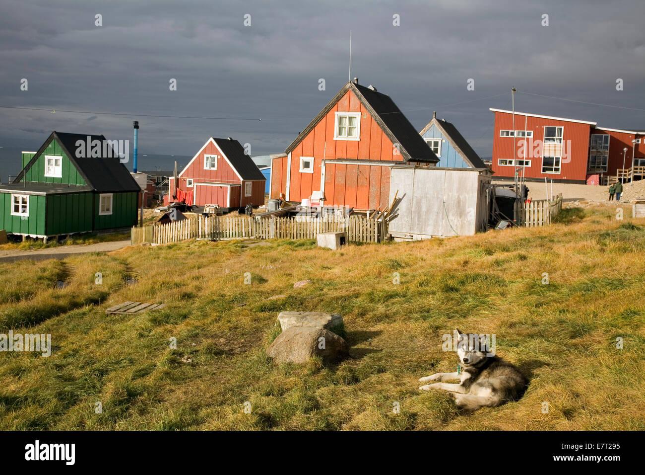 """Ein Schlitten Hund entspannt bei Qaanaaq, auch bekannt als """"neue Thule,"""" Grönland Stockbild"""
