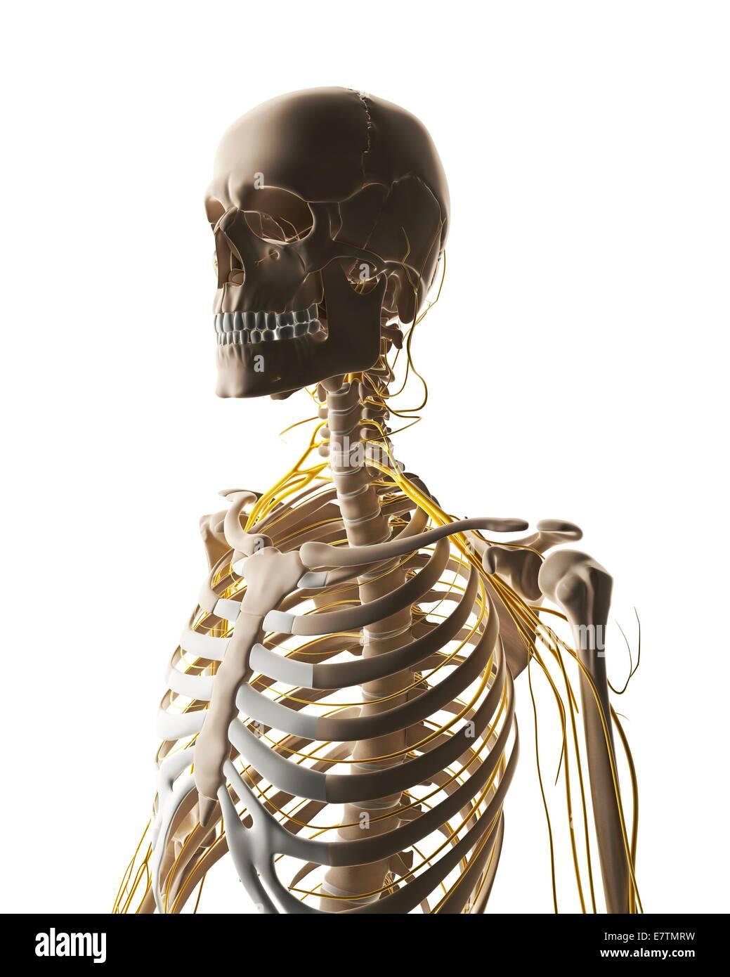 Ziemlich Weibliches Fortpflanzungssystem Bild Fotos - Anatomie Ideen ...