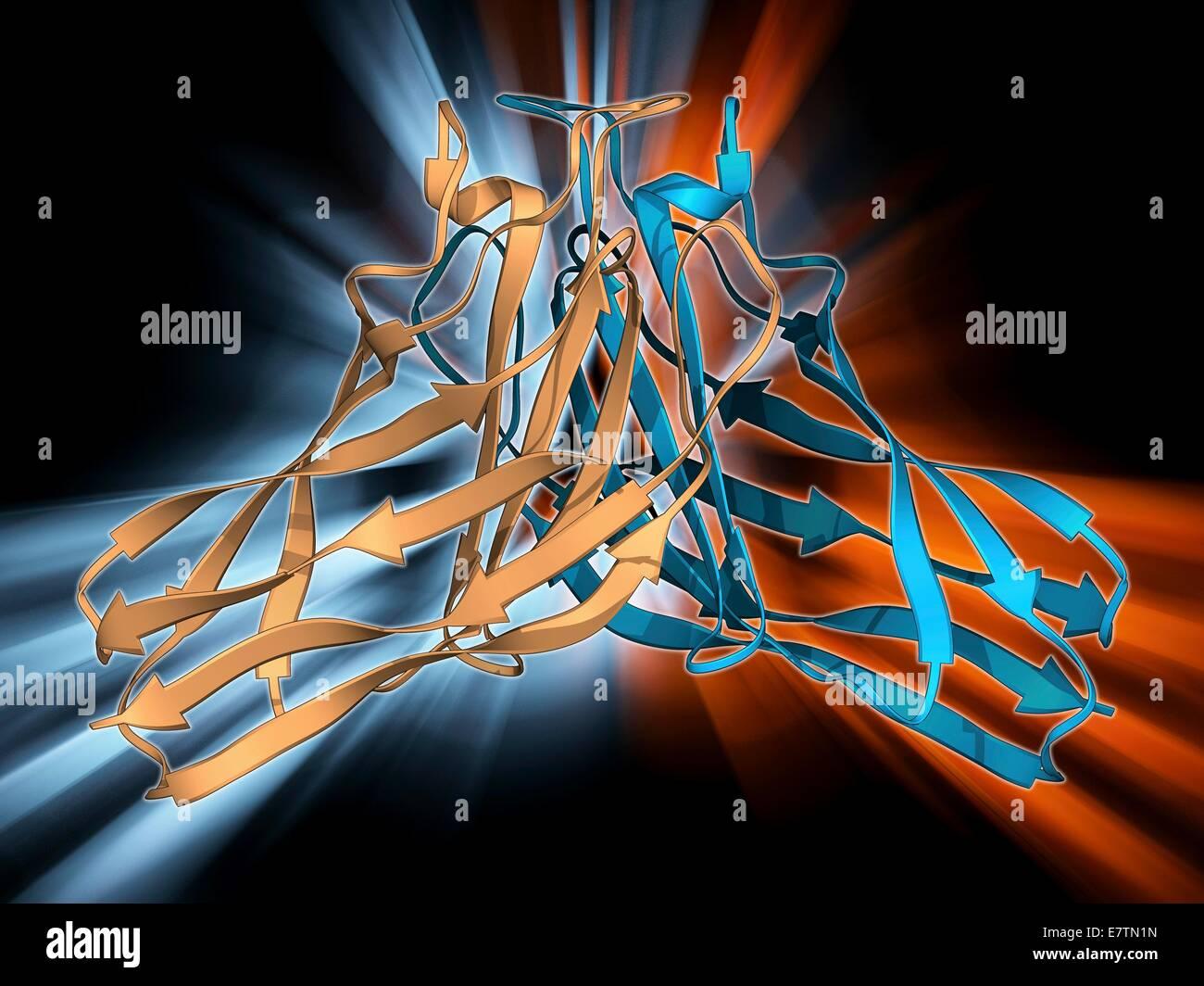 Cellulosome-Integration von Protein-Fragment. Molekülmodell des Geschäftsfeldes Zusammenhalt der Cellulosome Stockbild