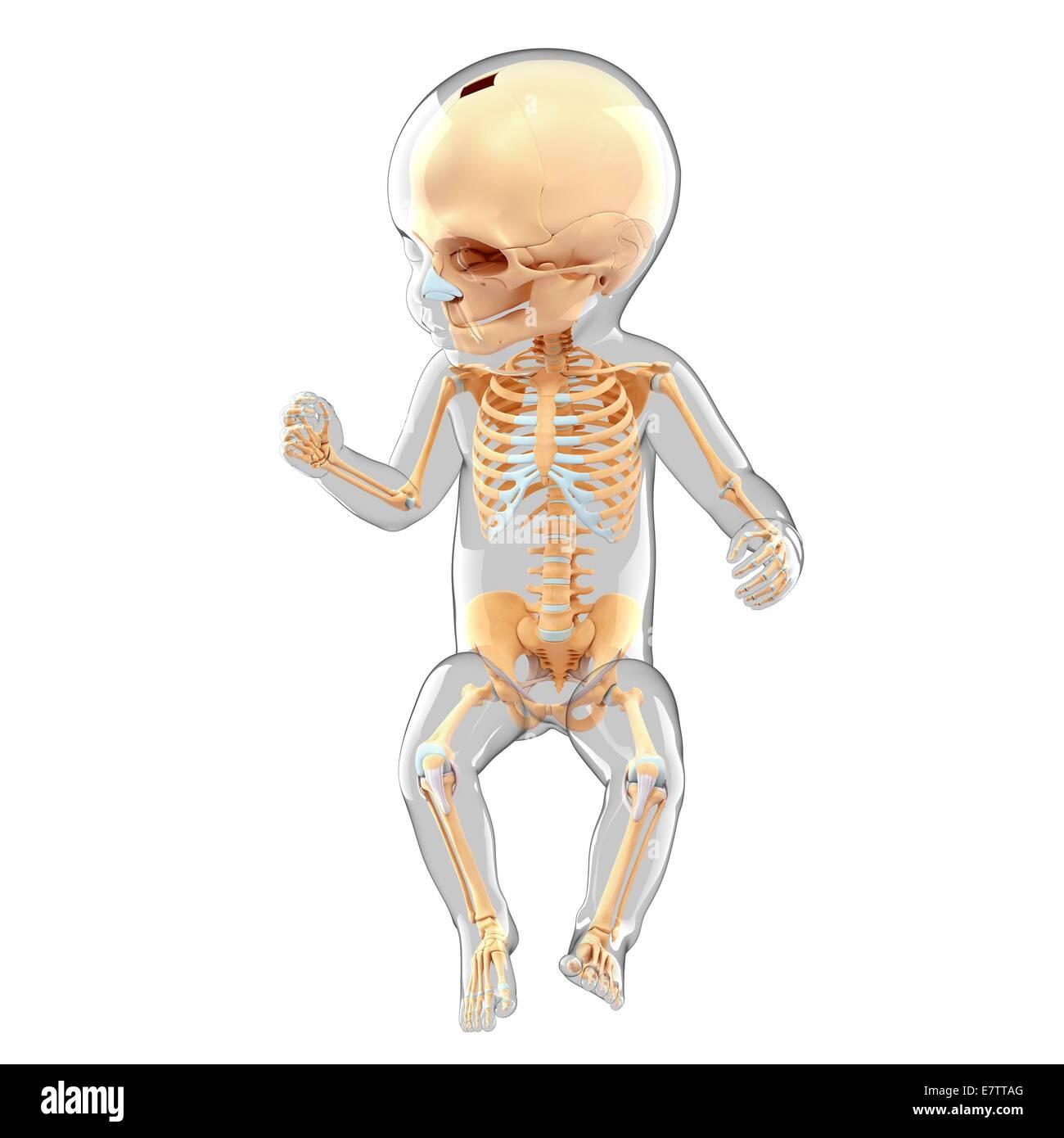 Fein Anatomie Skelett System Test Ideen - Anatomie Von Menschlichen ...