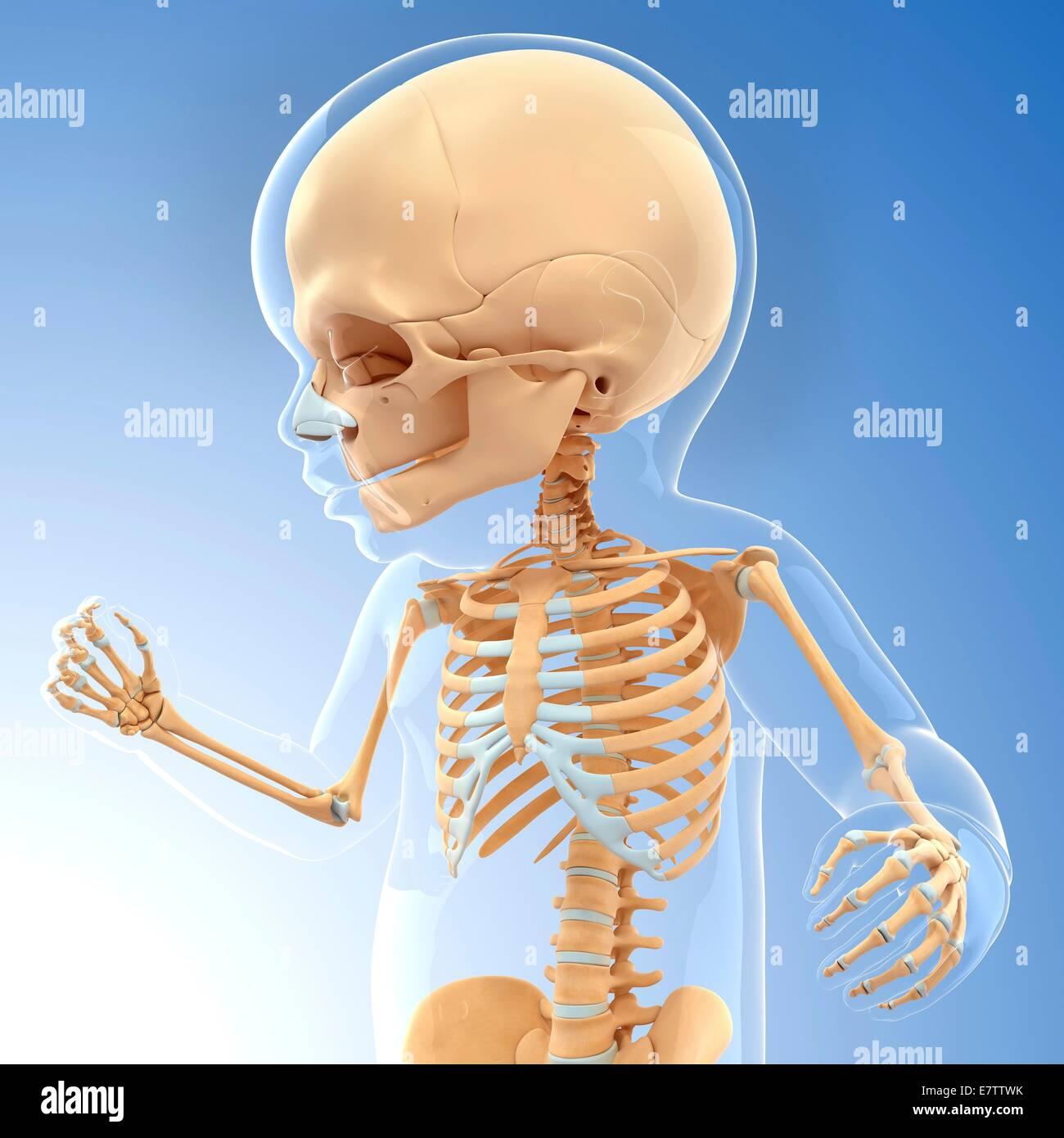 Tolle Skelett System Kennzeichnung Galerie - Menschliche Anatomie ...