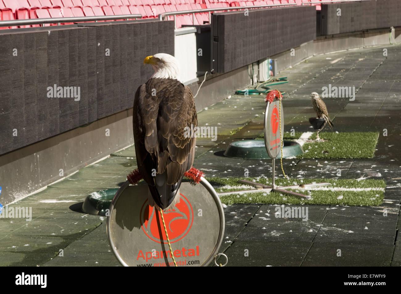 c8.alamy.com/compde/e7wfy9/adler-im-stadion-des-li...
