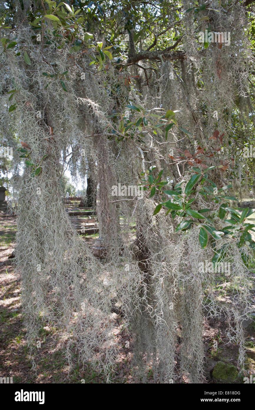 Baum Auf Spanisch