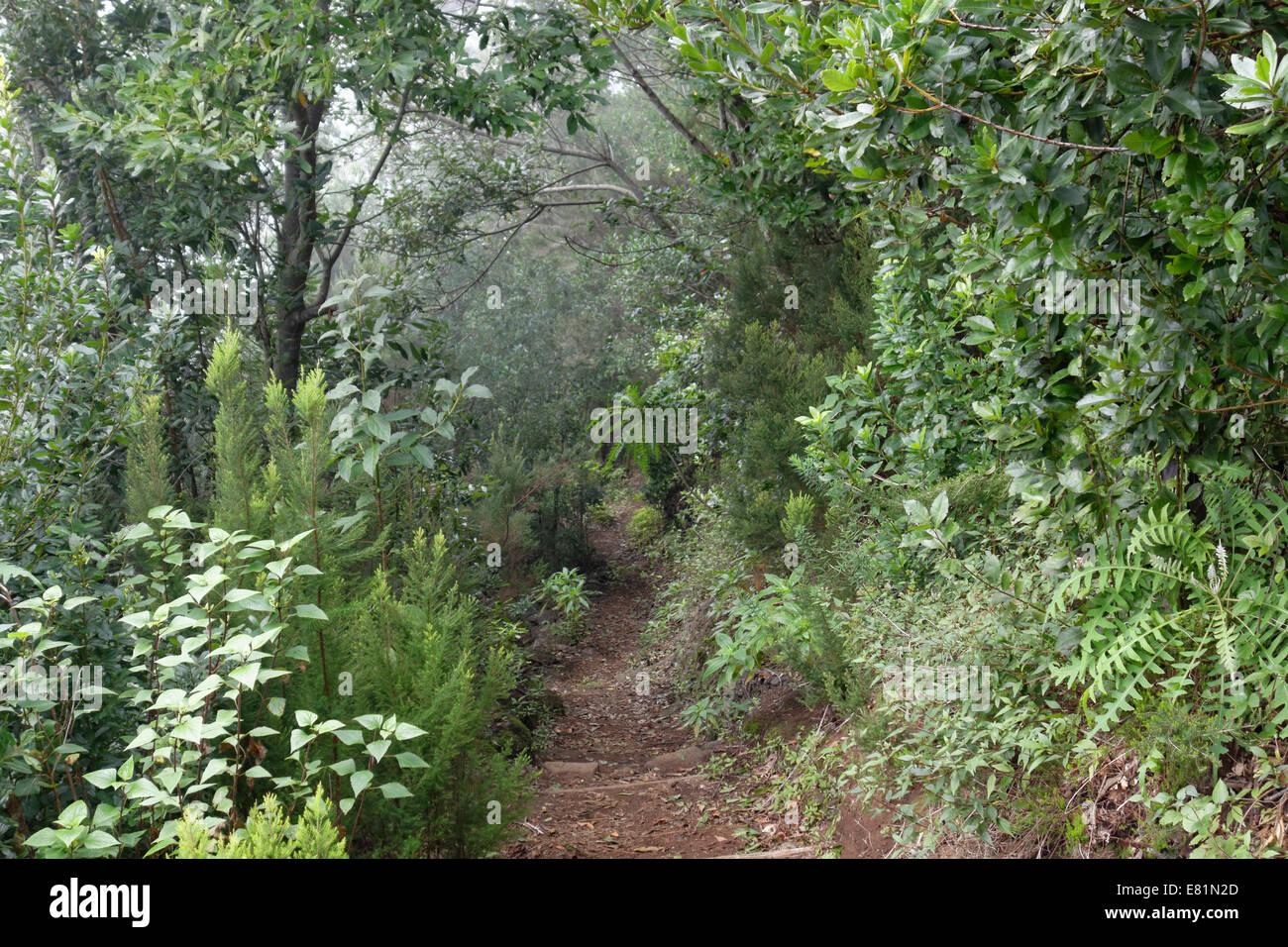 Wanderweg im Lorbeerwald Los Tilos-Biosphären-Reservat in der Nähe von Los Sauces, La Palma, Kanarische Stockbild