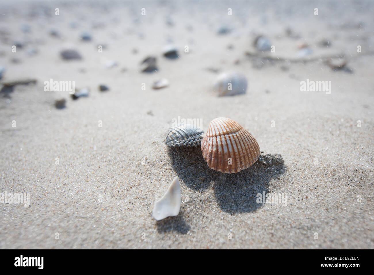 Detail von Muscheln am Strand Stockbild