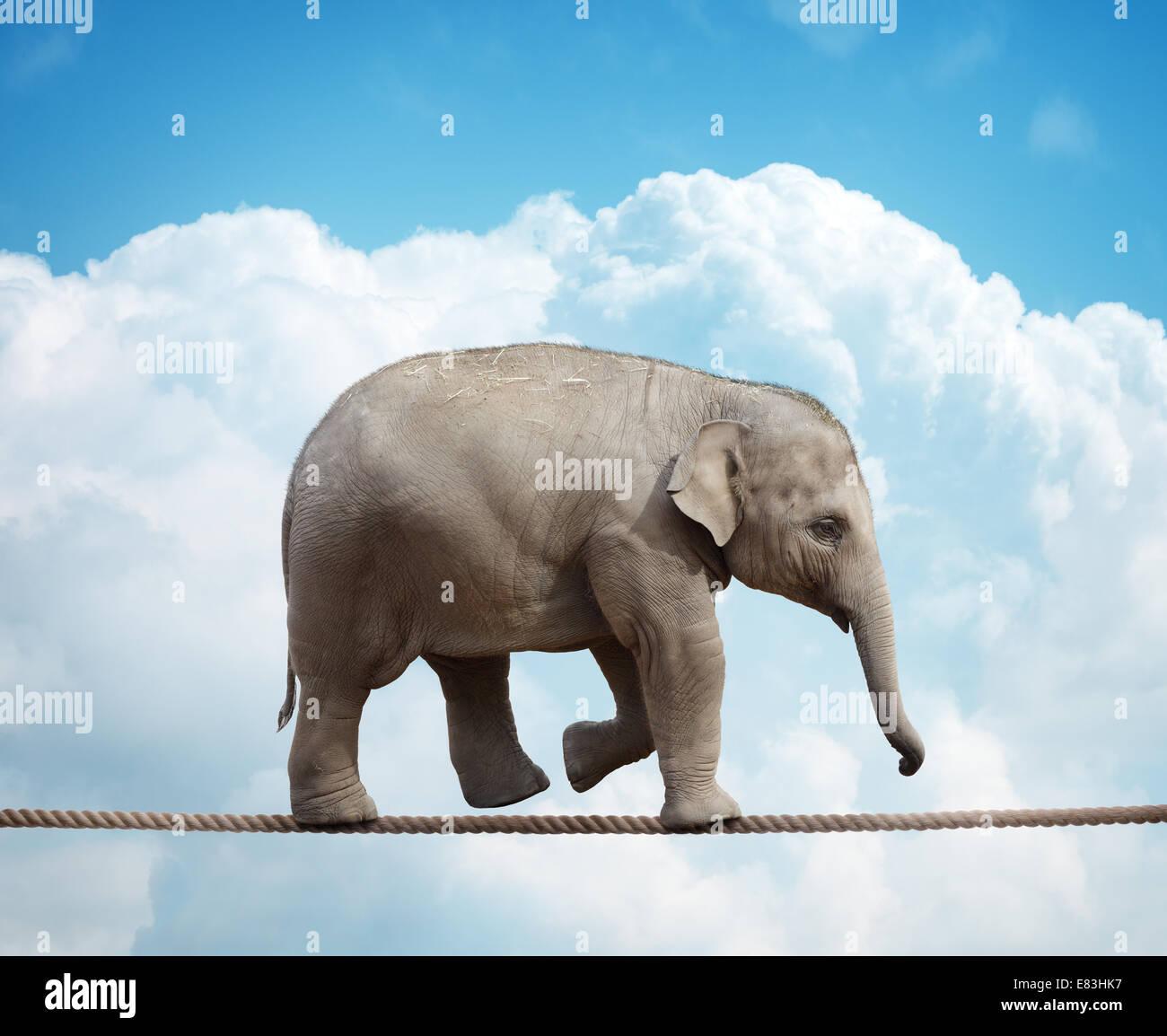 Elefant Kalb auf Drahtseil Stockbild