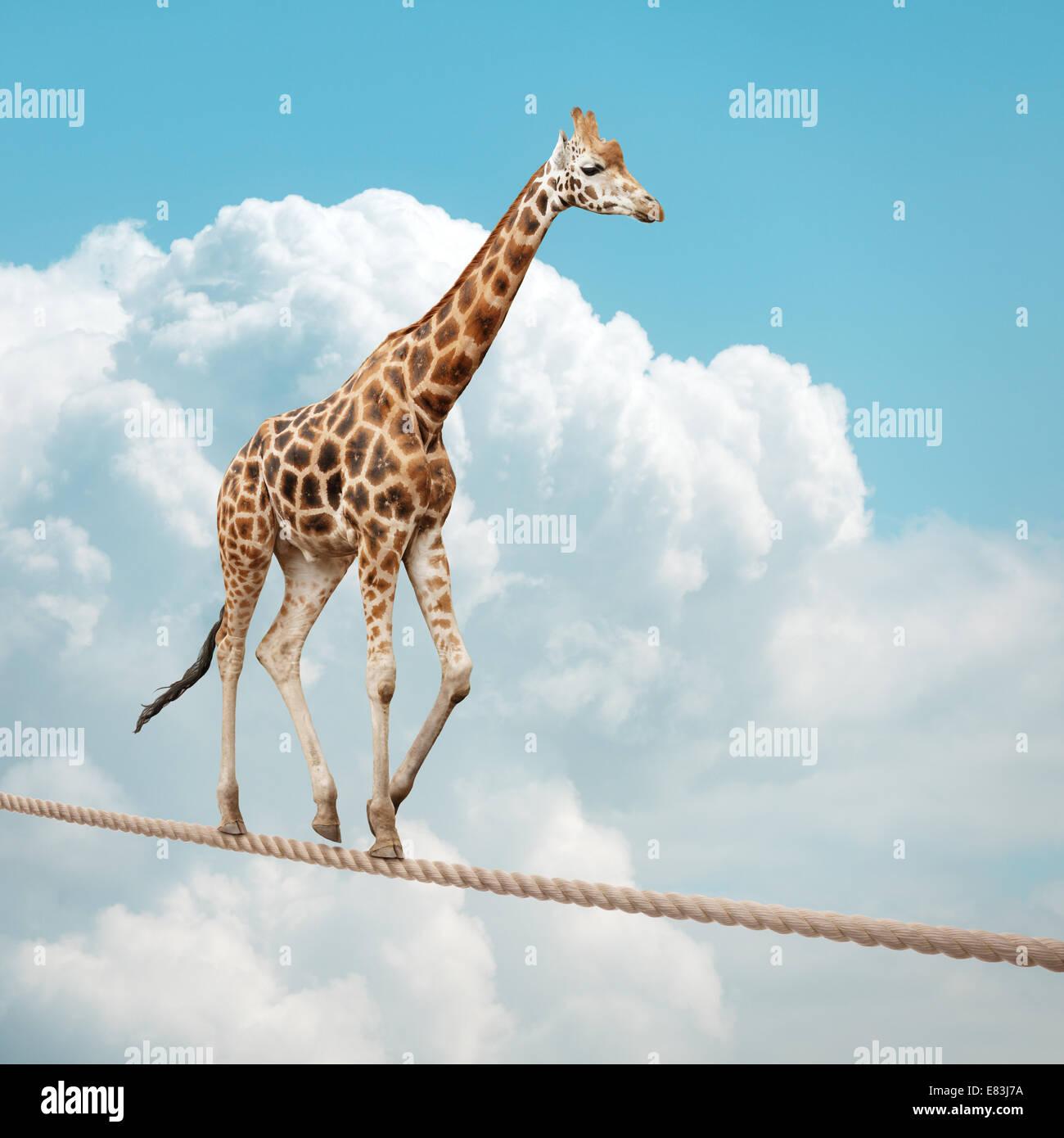Giraffe, balancieren auf einem Drahtseil Stockbild