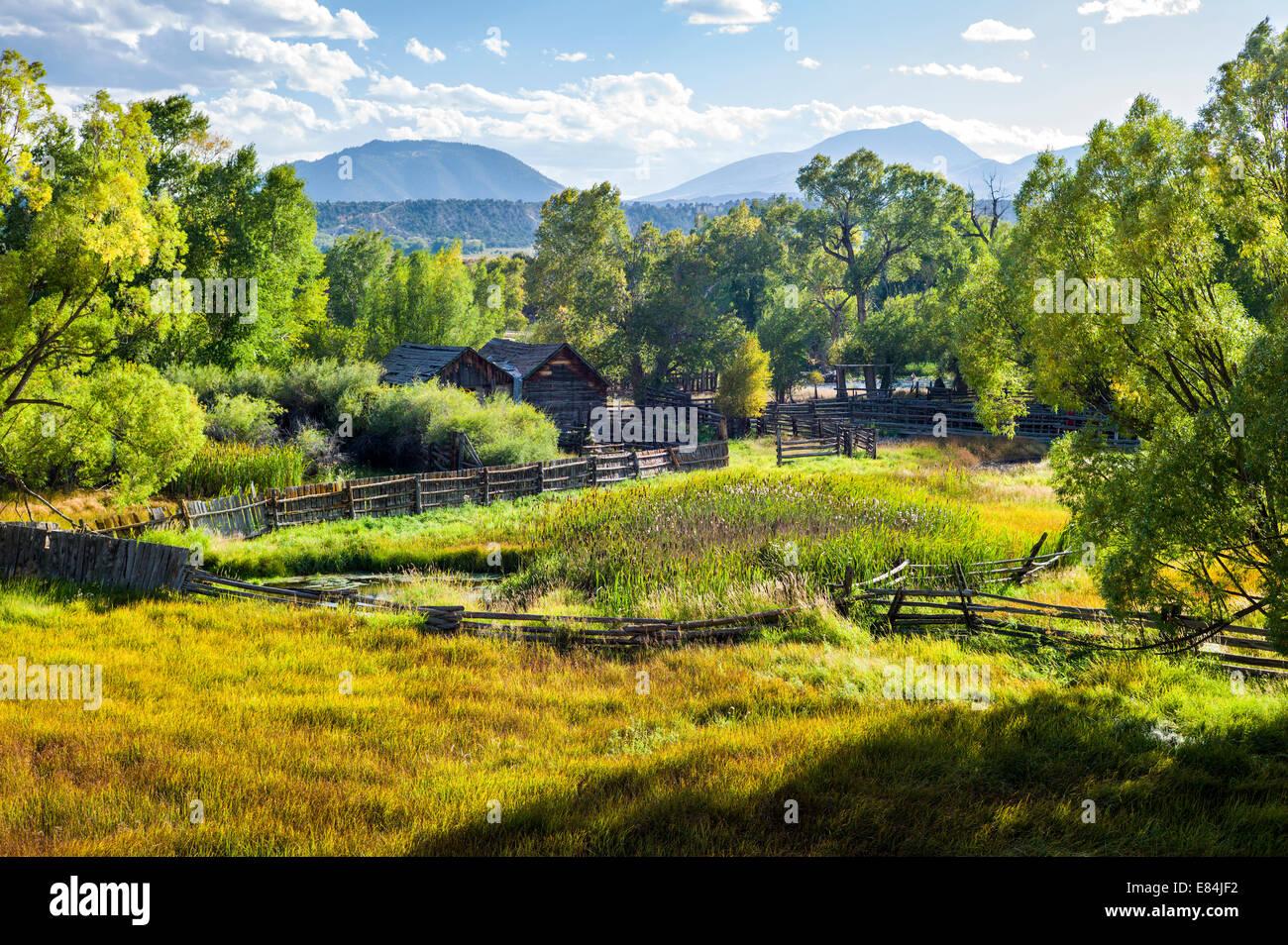 Pappel Baum & üppigen Weiden entlang des Arkansas River, Rocky Mountains hinaus zentralen Colorado, USA Stockbild