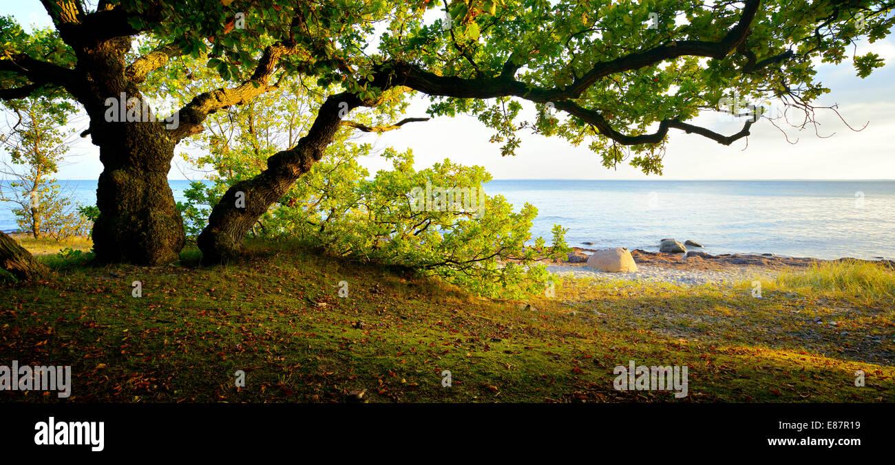 Küstenwald auf der Süd-Küste Seeland im Abendlicht, Faxe Bugt, Faxe Kommune, Seeland, Dänemark Stockfoto