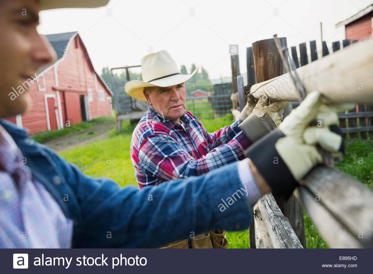 Rancher Zaunpfosten in Weide zu ersetzen Stockbild
