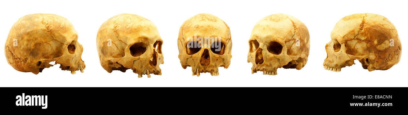 Echte menschliche Schädel isoliert auf weißem Hintergrund Stockfoto ...