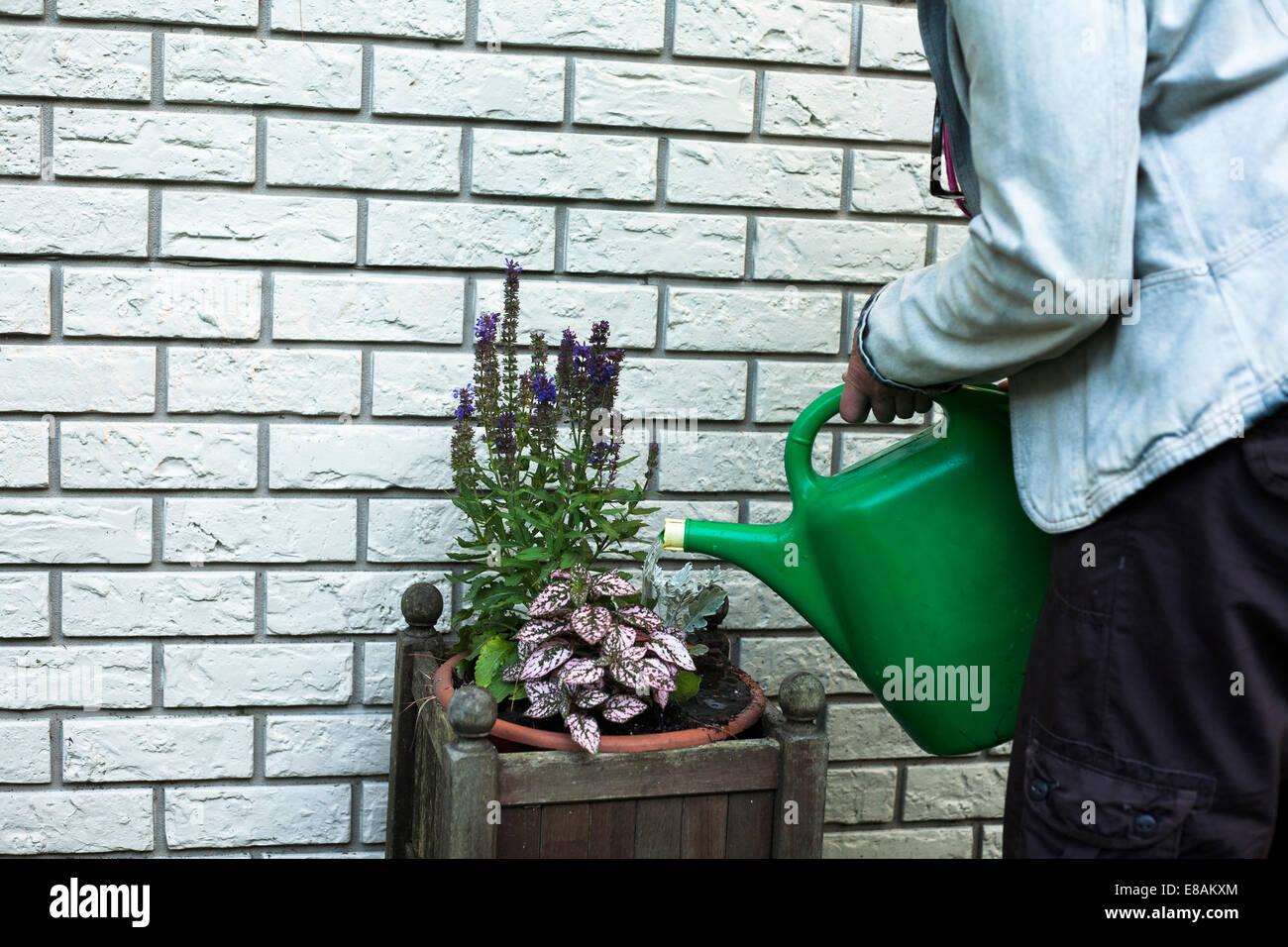 Schuss von Reife Frau, die Bewässerung von Pflanzen im Garten beschnitten Stockbild