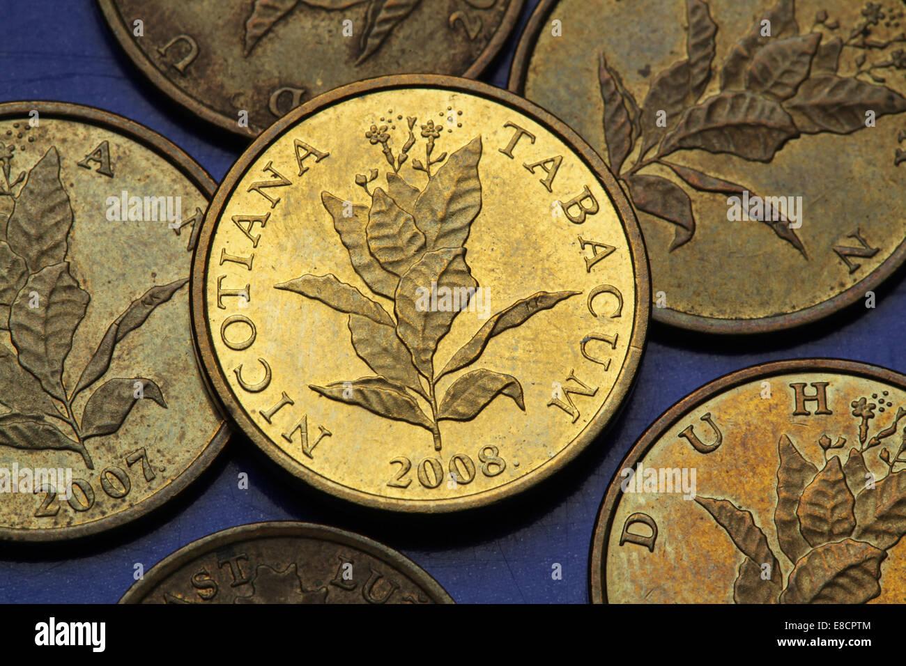 Münzen Von Kroatien Tabakpflanze Nicotiana Tabacum In Der