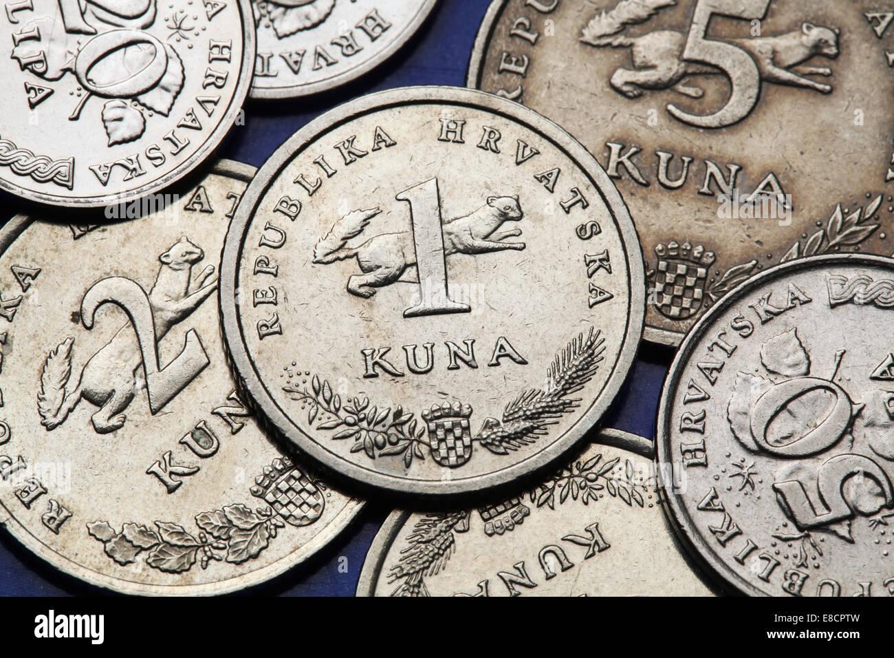 Münzen Von Kroatien Kroatischen Staatswappen Und Marder Martes