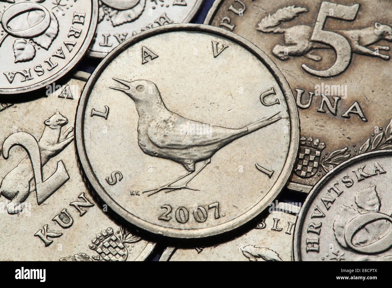 Münzen Von Kroatien Nachtigall Luscinia Megarhynchos In Der