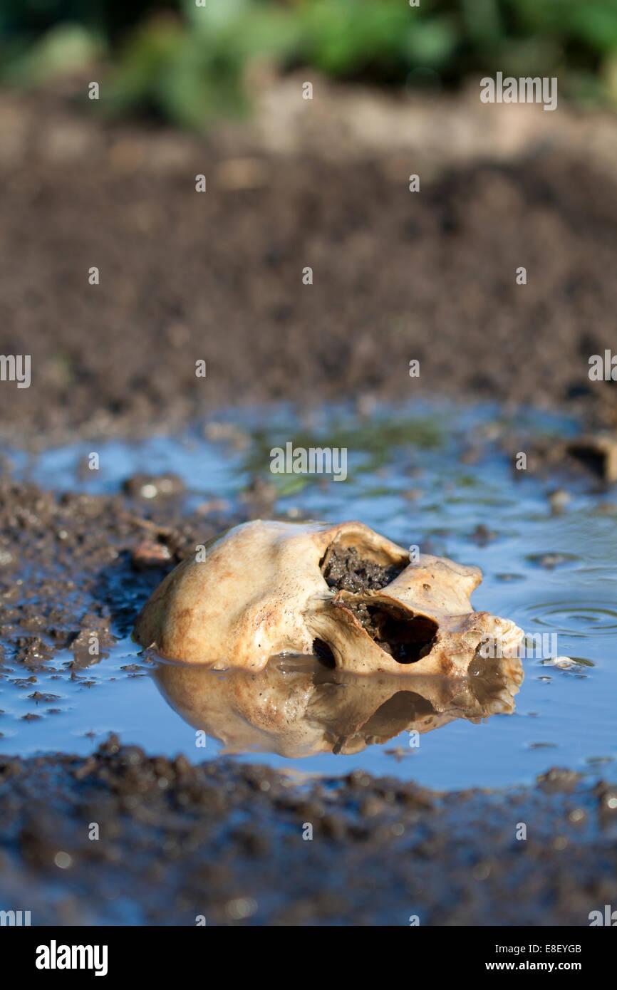 Echte menschliche Schädel als Tatort Stockbild