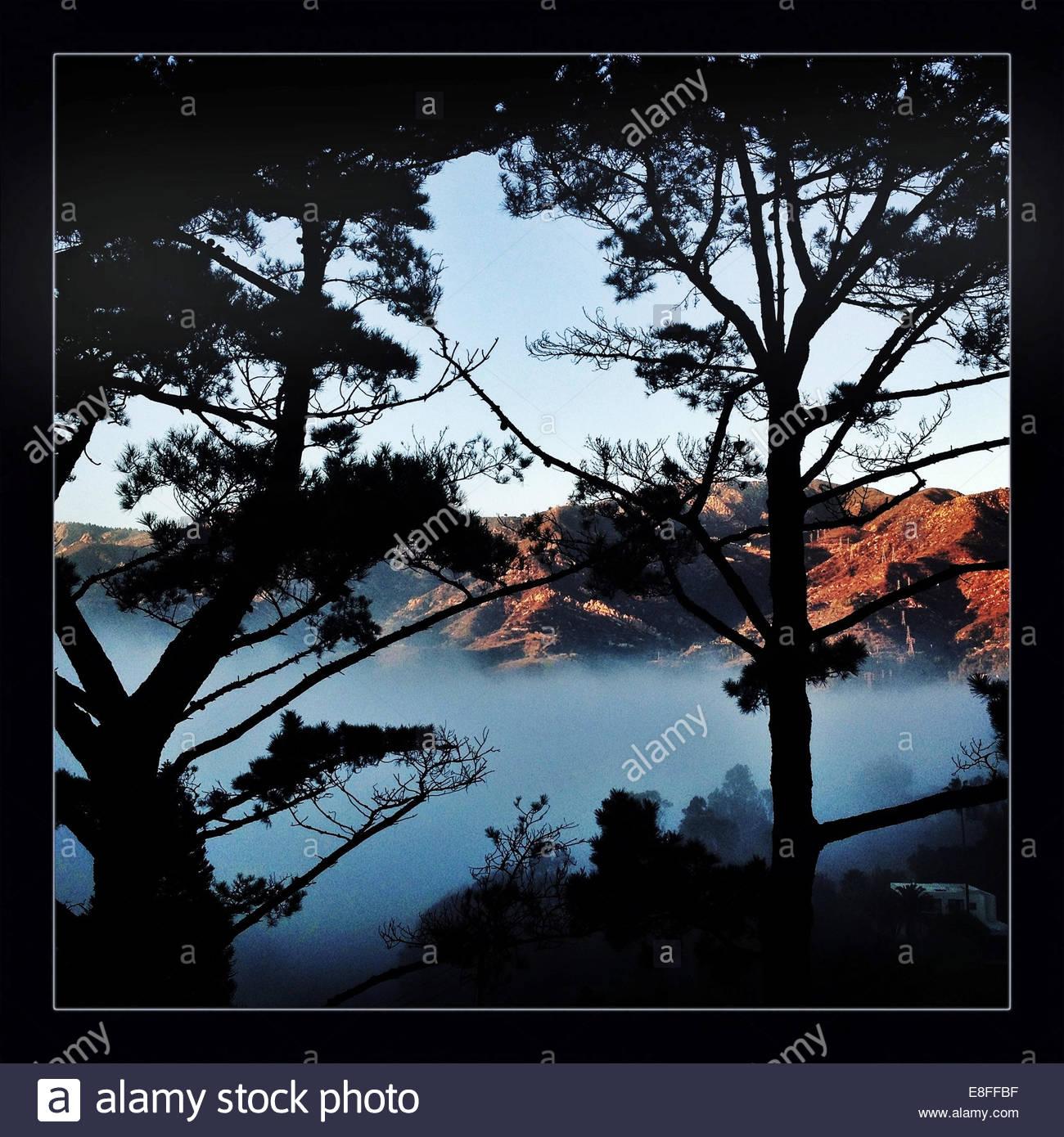 Bäumen und nebligen Hügeln Stockbild