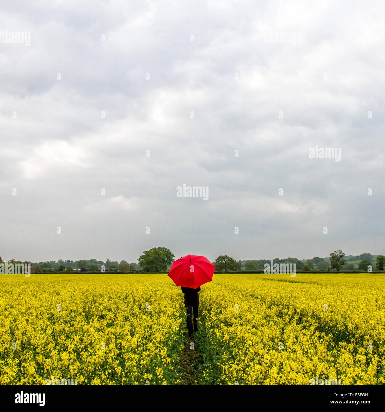 Frau mit roten Regenschirm in der Mitte des Feldes Stockbild