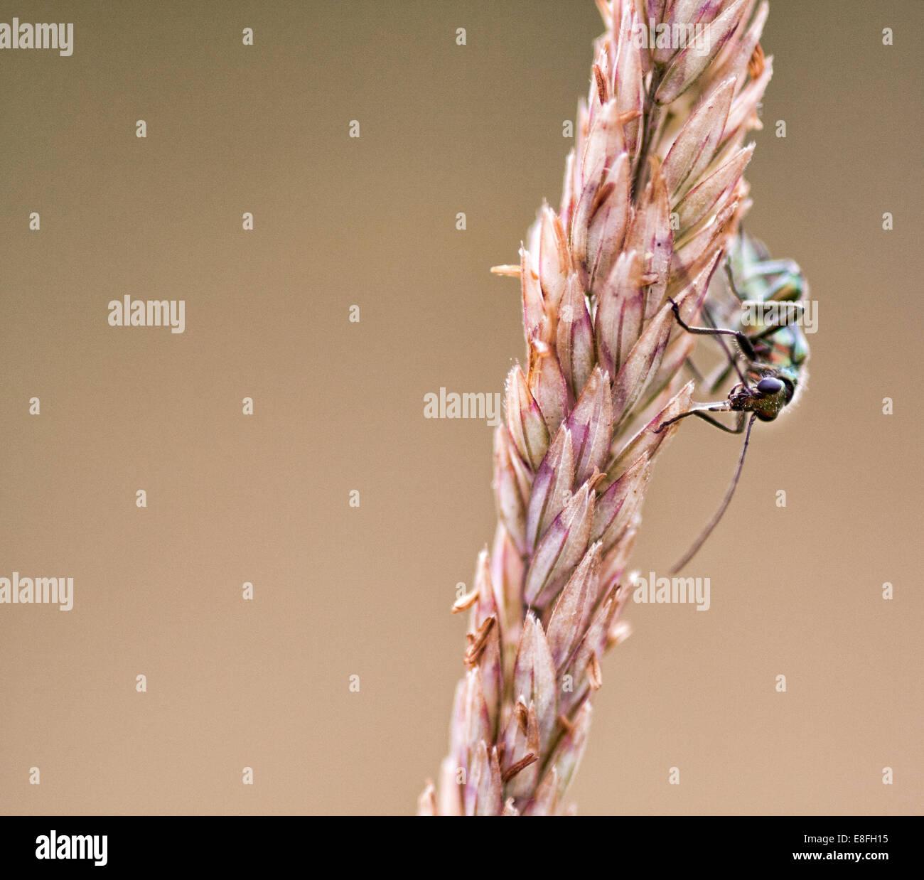 Nahaufnahme von Insekt auf Pflanze sitzend Stockbild