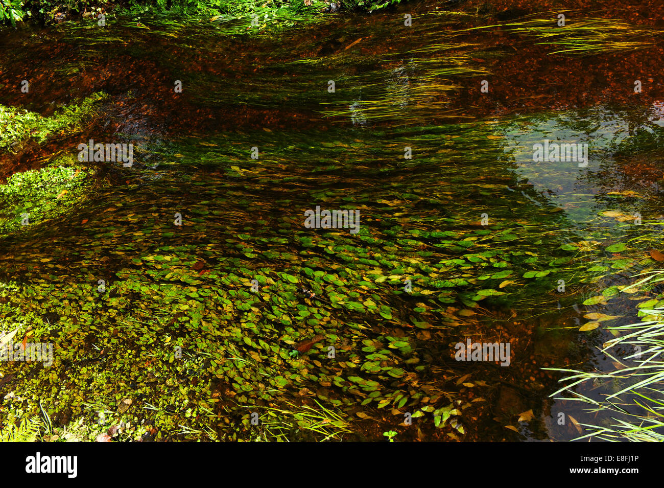 UK, England, Hampshire, New Forest National Park, Strom, fließendes Wasser und Rasen Stockbild