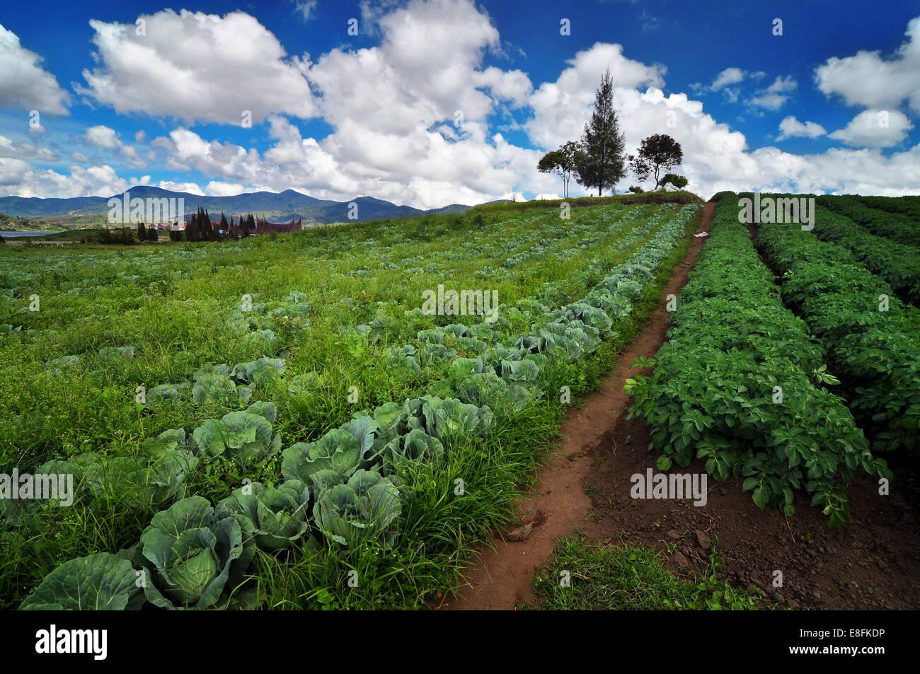 Indonesien, West-Sumatra, Nagari Timbulun, Alahan Panjang, Blick auf Feld Stockbild