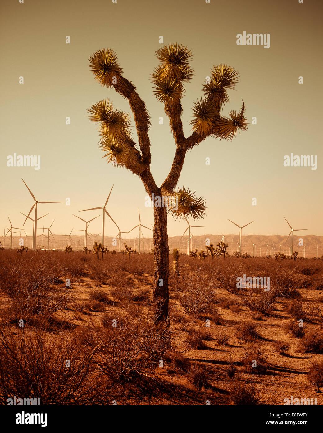 Einzigen Baum von Wüste, Windkraftanlagen im Hintergrund Stockbild
