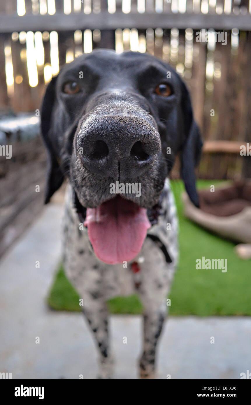 Argentinien, Buenos Aires, Nahaufnahme des Hundes Stockfoto