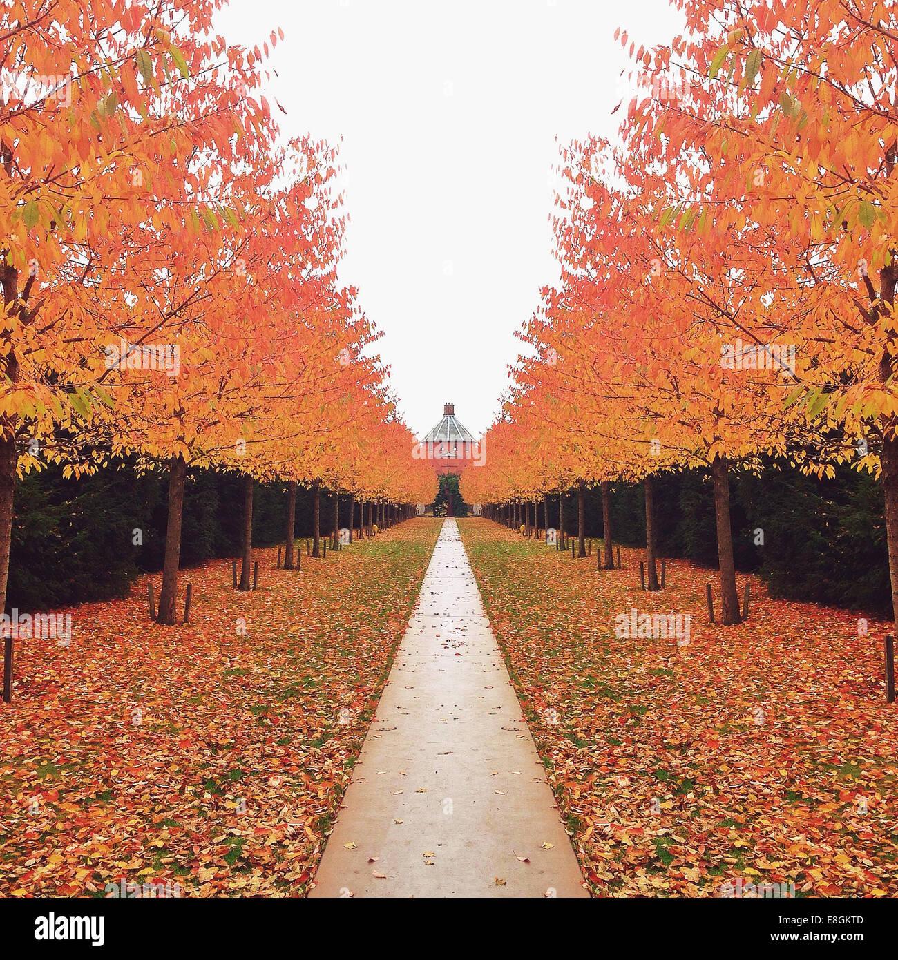 Dänemark, Kopenhagen, Bäumen gesäumt Weg im Herbst Stockbild