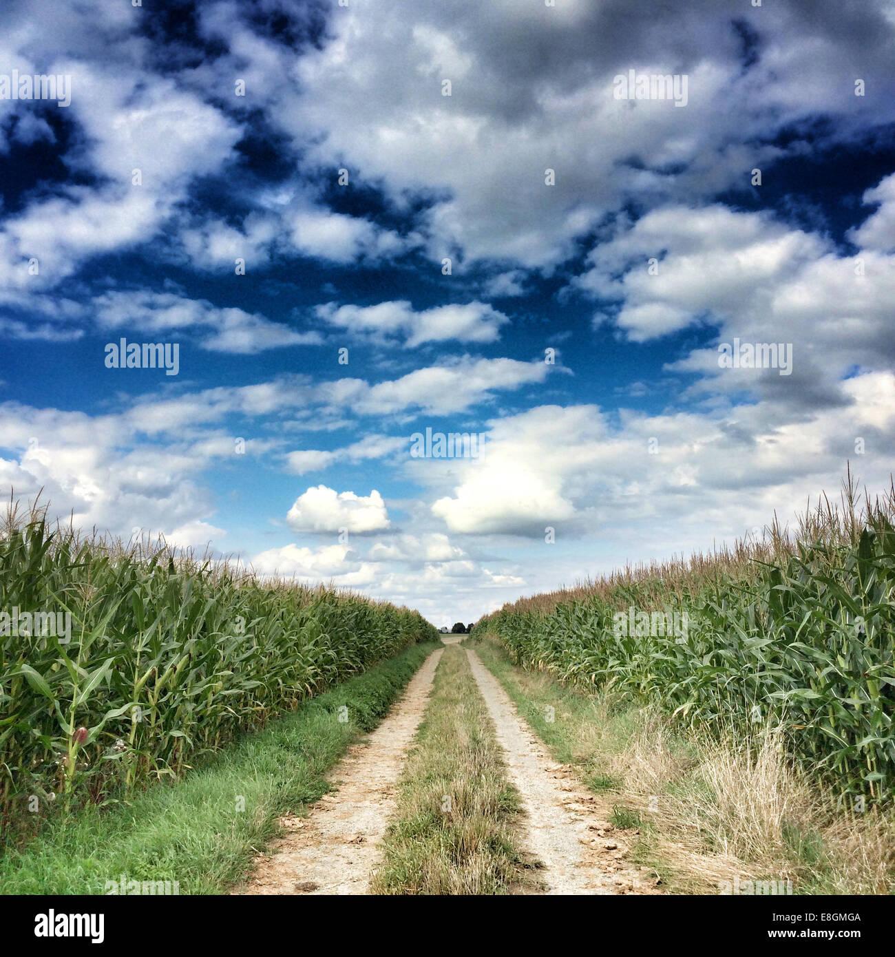 Deux-Sèvres, Frankreich, Single line Feldweg zwischen Getreidefeldern Stockbild