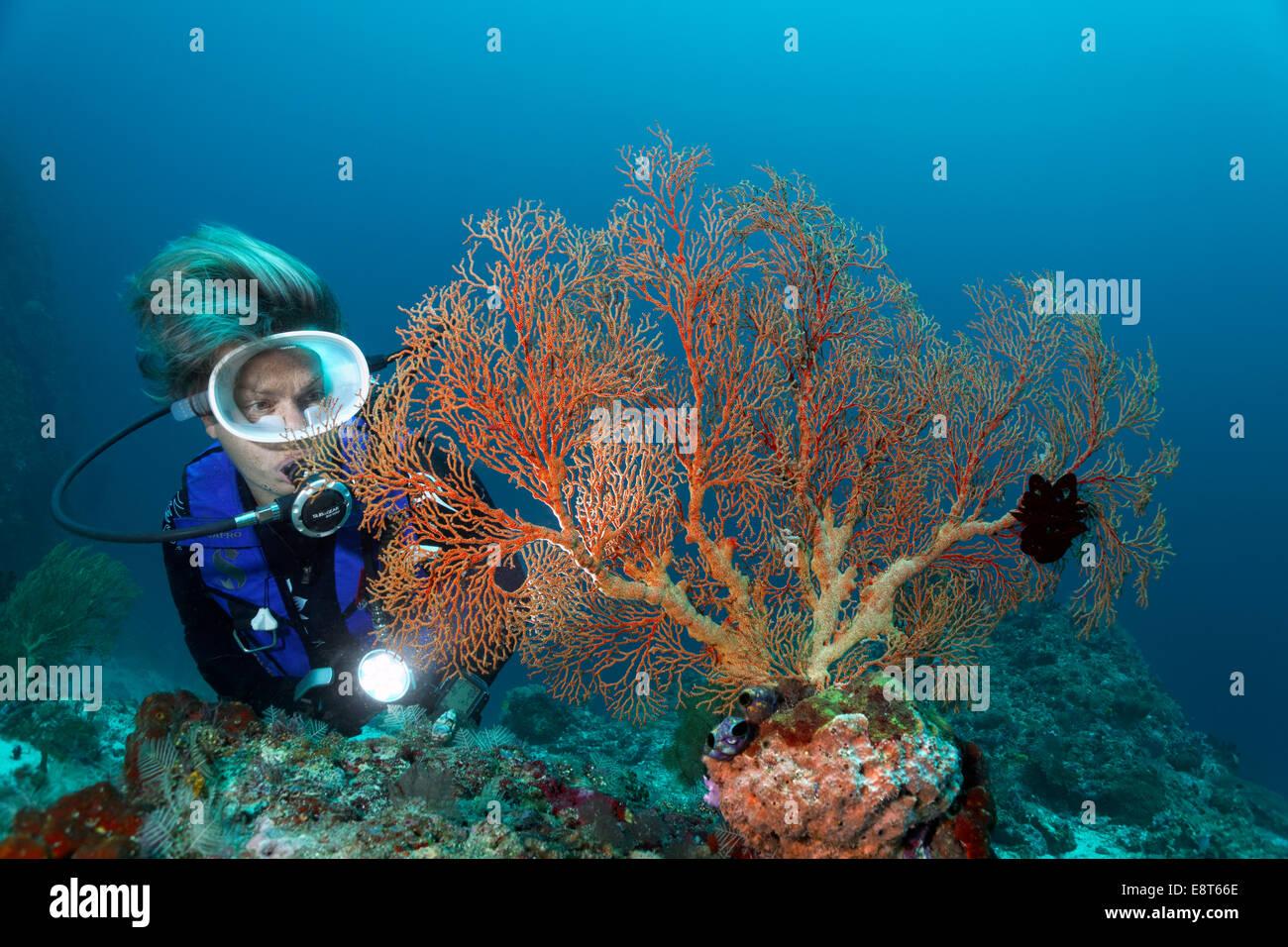 Female Scuba Diver Stockfotos & Female Scuba Diver Bilder - Alamy