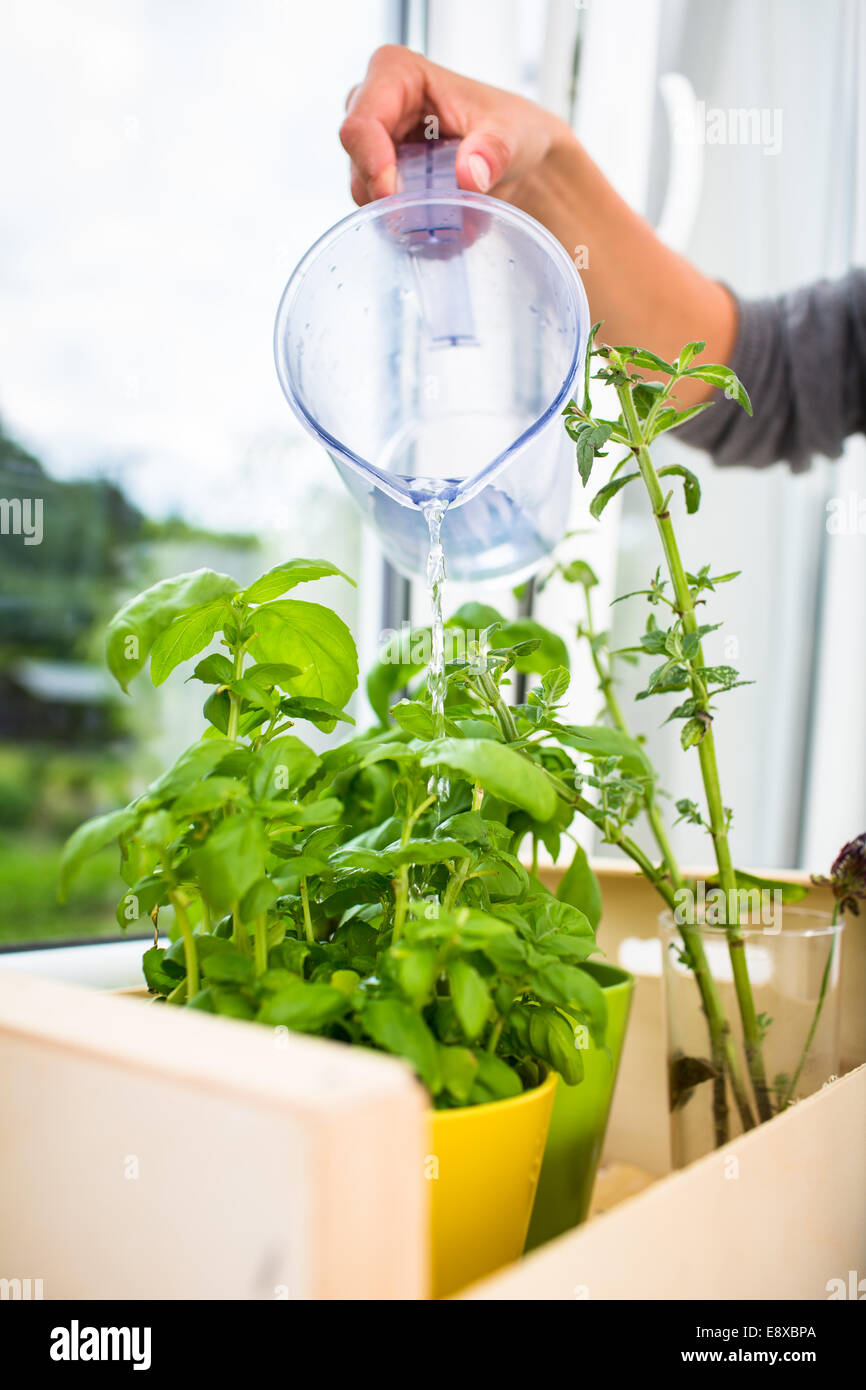 Pots With Herbs Stockfotos & Pots With Herbs Bilder - Seite 22 - Alamy