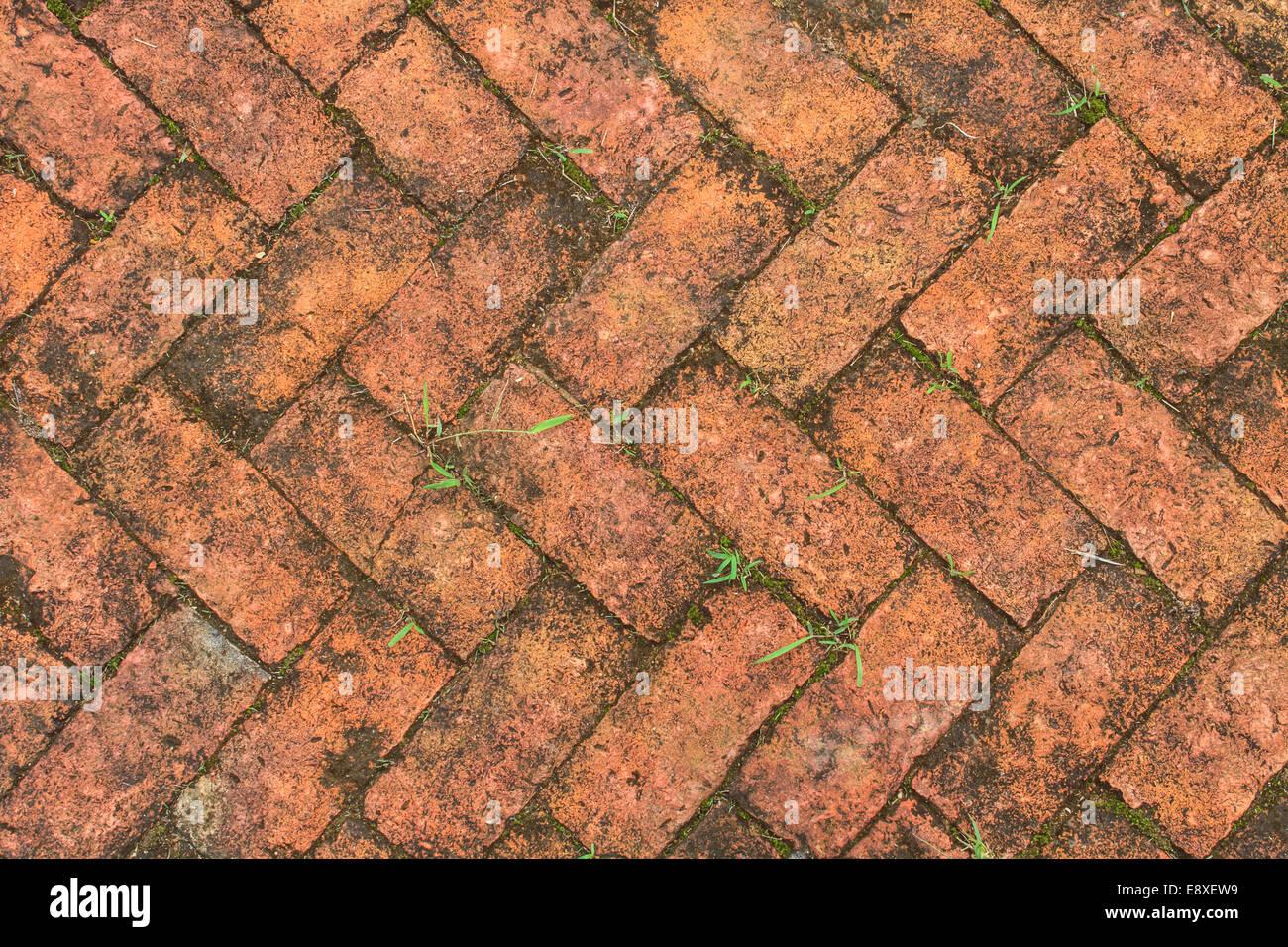 Fußboden Aus Backsteinen ~ Alten backstein fußboden mit moos im garten stockfoto bild