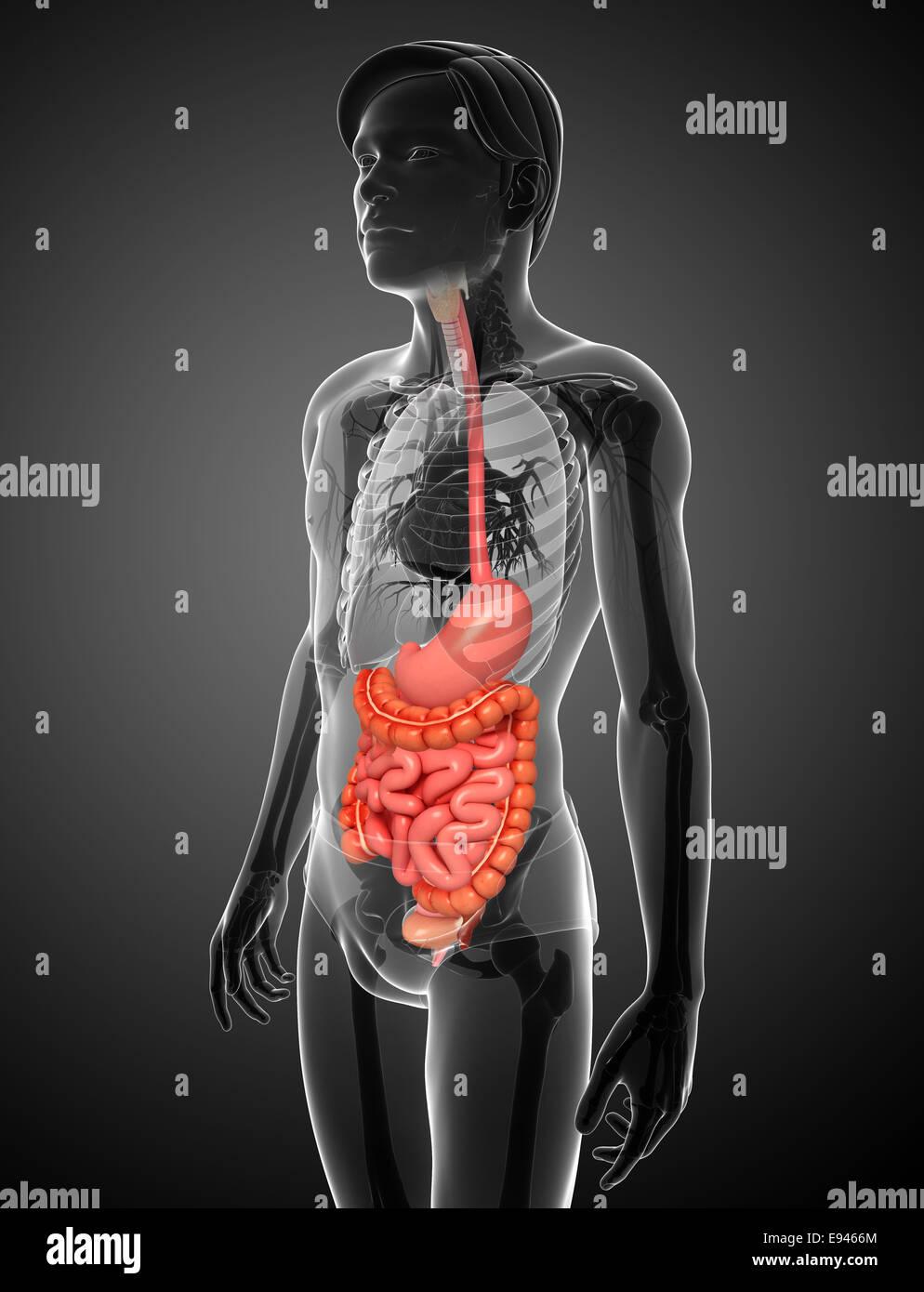 Atemberaubend Nabelschnur Anatomie Und Physiologie Fotos ...