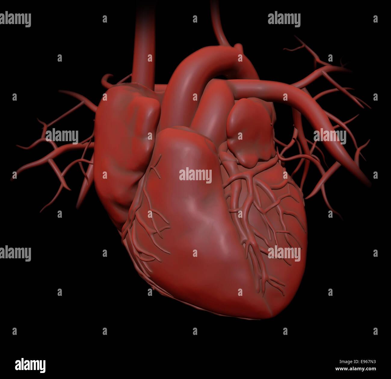 Menschliches Herz - Kardiologie Gesundheitswesen Abbildung Stockbild
