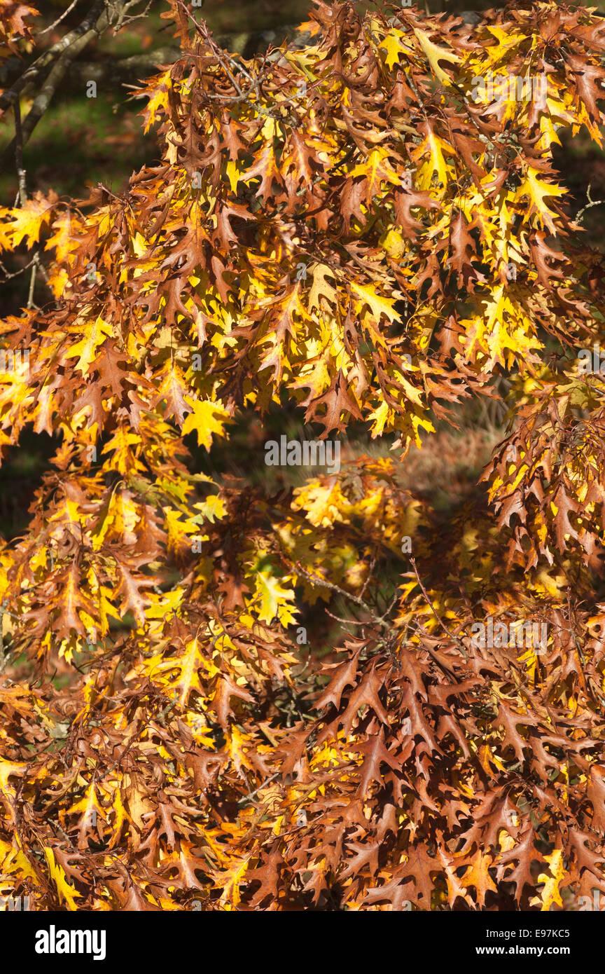 die wechselnden gemischter warmer Farben im Herbst über die Türkei ...
