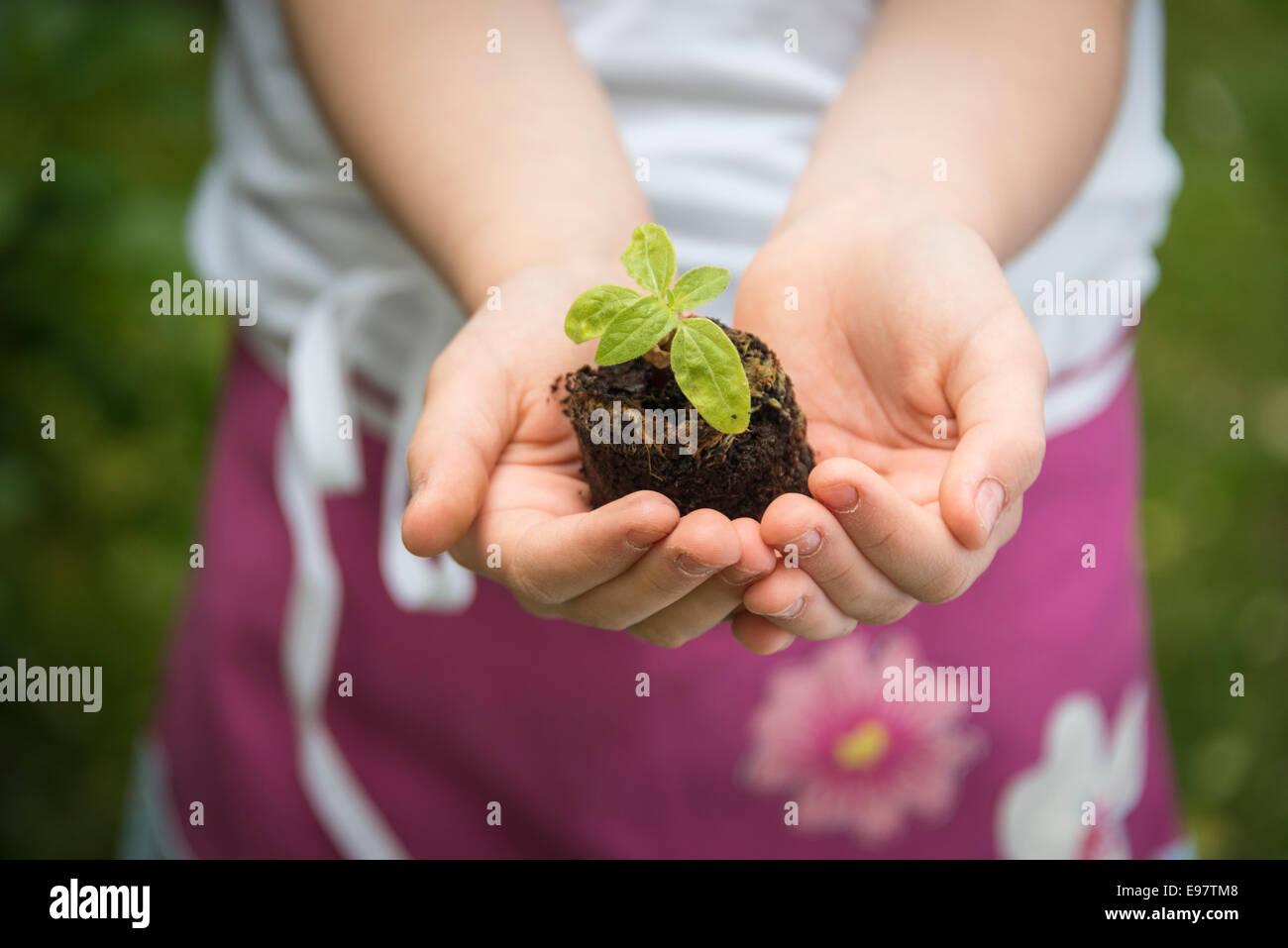 Kleines Mädchen, Gartenarbeit, Sämling in den Händen halten Stockbild