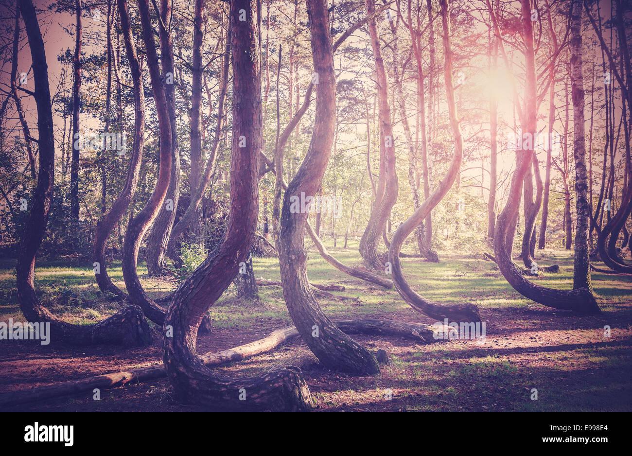 Vintage gefilterte Bild des Sonnenuntergangs am geheimnisvollen Wald. Stockbild